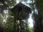 Lagi Rumah Atas Pokok