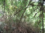 Hutan buluh