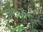 Hutan Simpan Berembun